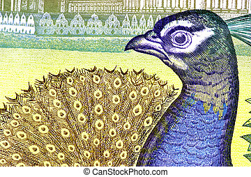 Peacock on Currency Note