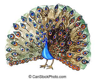 peacock - illustration of beautiful peacock