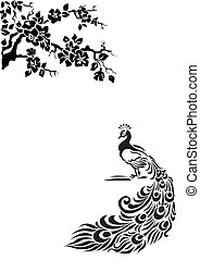 Peacock under a blossoming apple tree. Black and white ...