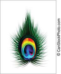 peacock veer, vector, illustratie