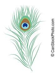 peacock veer, vrijstaand, vector, illustratie