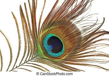 peacock's tongue