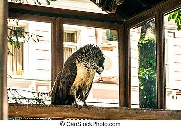 peafowl, dentro