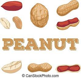 Peanut set. Hand drawn peanuts.