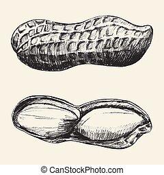 Sketch illustration of peanuts