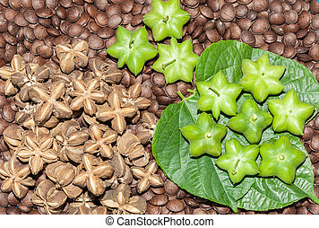 Peanut star shape fresh from the tree