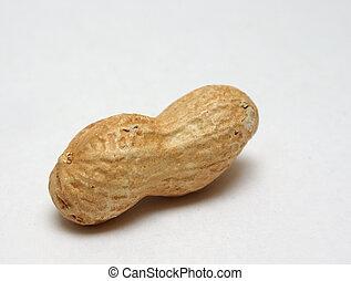 peanut on a soft grey background