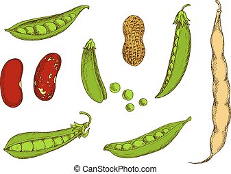Peanut, sweet green peas and beans sketch