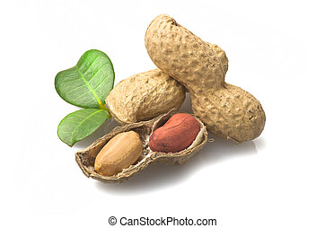 Peanuts on a white background.