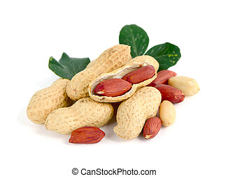Peanuts on white background.
