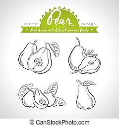Pear. Hand drawn collection of vector sketch detailed fresh ...