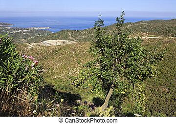 Pear on background of the Aegean coast.