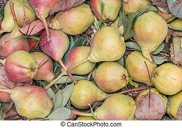 pear texture fruit