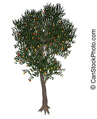 Pear tree - 3D render - Pear, pyrus communis, tree isolated...