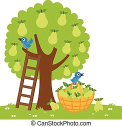 Pear tree harvesting - Vector Illustration of a pear tree, a...