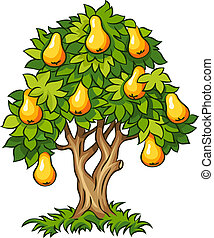 pear tree with ripe fruits vector illustration isolated on...