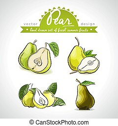 Pear. Vector hand drawn collection of sketch fresh fruits ...
