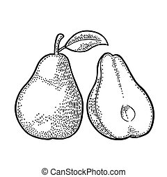 Pear whole and half with leaf. Vintage black engraving