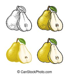 Pear whole and half with leaf. Vintage color engraving