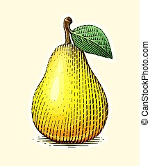 Pear with leaf. Fruit in vintage engraving style.