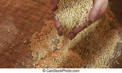 pearl barley spilling on burlap. grits for porridge