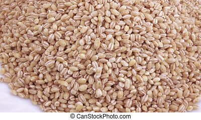 Wheat pearl barley with pests in bulk