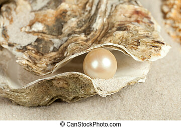 Pearl in oyster - Oyster on a sandy beach with one large...
