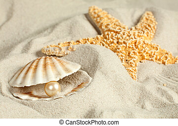 Pearl in seashell