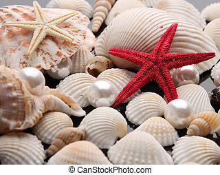 pearl on the seashell
