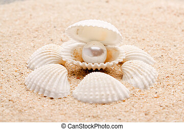 pearl on the seashell