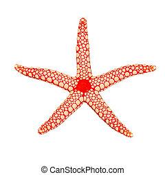 Pearl sea star (Fromia monilis), isolated on white ...