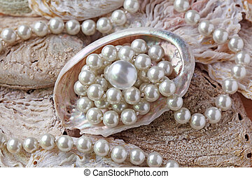 Pearls in a shell close up