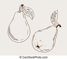 Pears 2 sketch vector illustration - Pears sketch hand drawn...