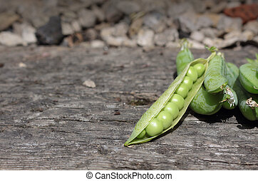 Peas - A crop of freshly picked peas in their pods. Set on a...