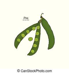 Pea pods vector illustration.