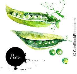 peas., hand, gezeichnet, aquarellgemälde, weiß, background?