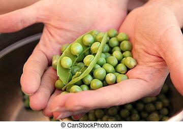 peas in hands