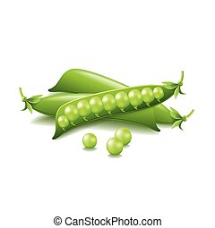 Peas isolated on white vector