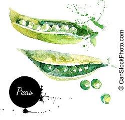 peas., mano, dibujado, pintura de acuarela, blanco, background?