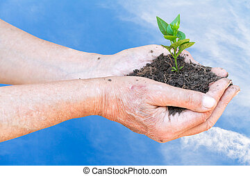 peasant hands with handful soil and green sprout