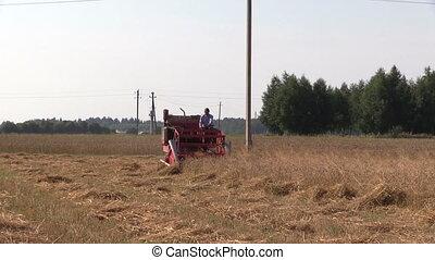 peasant harvest wheat