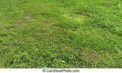 peasant man trim grass - Cut lawn and gardener man trim...