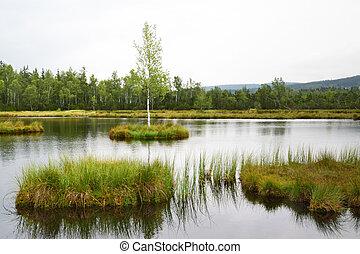 A peat bog in Sumava, Czech Republic