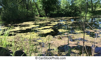 Peat bog in the middle of the forest. Black water, overgrown...