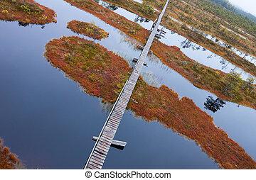 peat bog swamp northen Europe