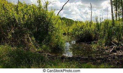 Peat bogs. Peat bogs in nature. wild nature. 87 - Peat bogs....