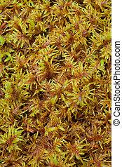 Peat Moss (Sphagnum) background pattern texture.