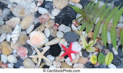 pebble stones,starfish and seashell - Fountain plash on...