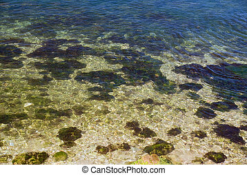 pebbles and seaweed in shallow water