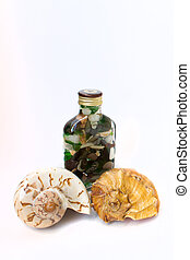pebbles in a bottle and seashells
